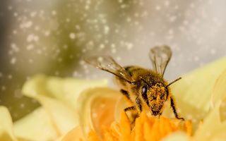 Физминутка Пчёлка