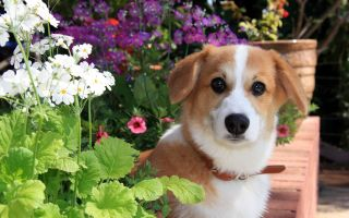 Физминутка про собаку для дошкольников