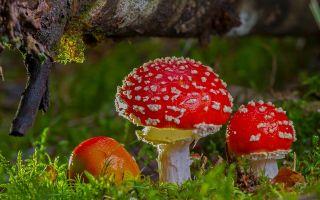 Физминутки про грибы