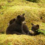 Физминутка Медвежата в чаще жили