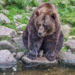 Физминутки про медведя