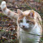 Физминутка кошка беспородная