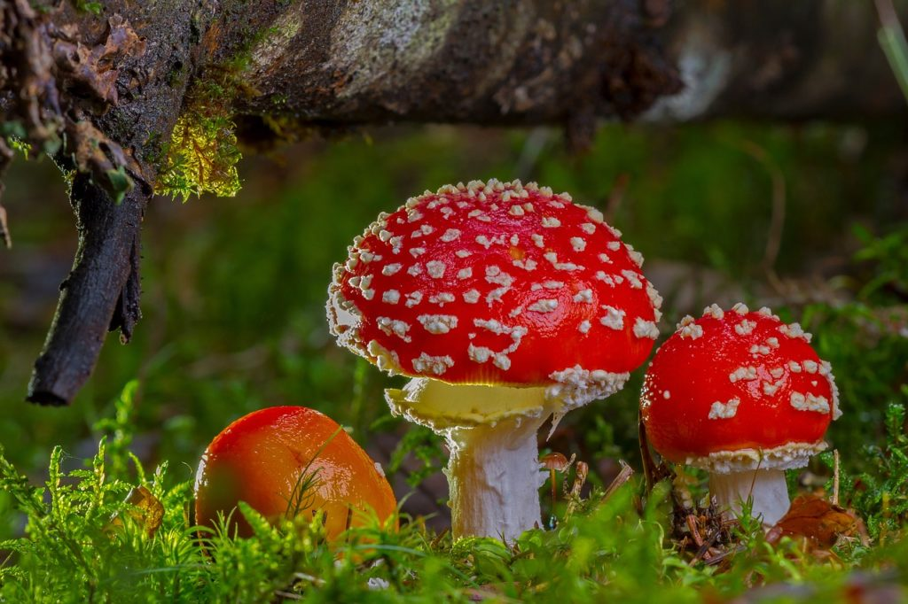 Физминутка про грибы