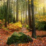 Физминутки про деревья