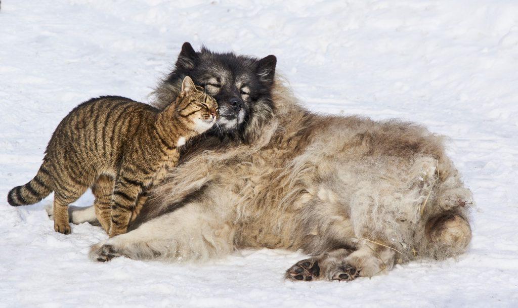 Дружба кошки и собаки