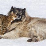 Физминутка дружба